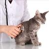 Ветеринарные клиники в Тихорецке